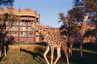 disneys-animal-kingdom-lodge